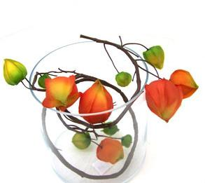 Physalis branche