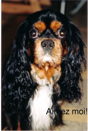 Owen portrait