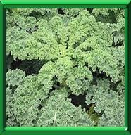 Kale - bv000004_thumb