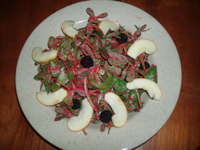 Salade mâche-pourpier et sauce russe - P8290487