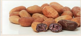Cacao_beans2