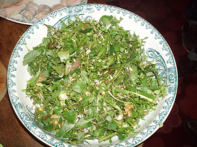 Pont aux oies 16 - Quelle superbe salade sauvage !