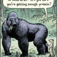 Gorille assez protéines