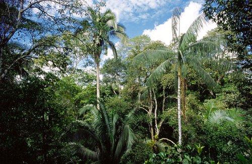 Parc Yasuni - Forêt